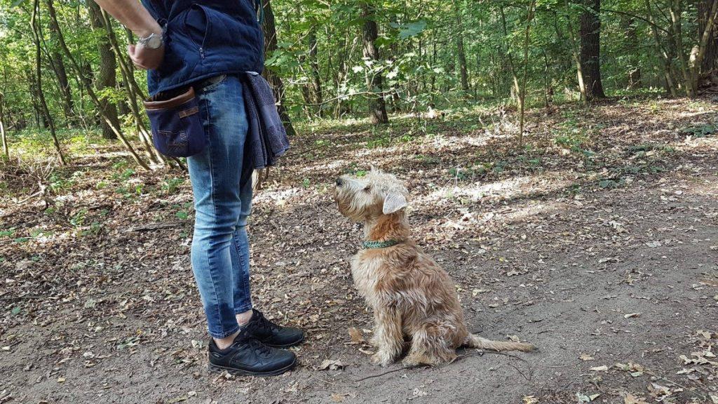 kölyökkutya tanítása - Hippievel erdőben