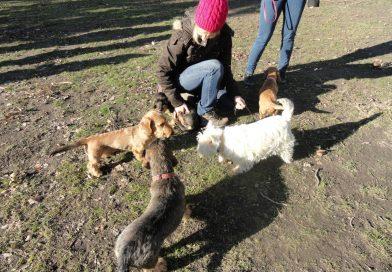 Mire vágyik, illetve mire van szüksége a kölyök, később a felnőtt kutyának?
